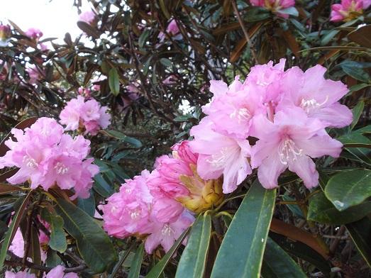 003-17花.jpg