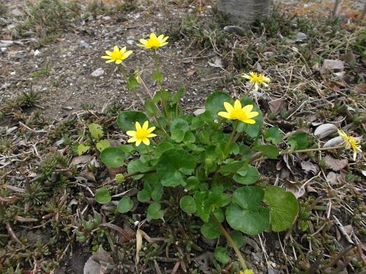030-17花.jpg