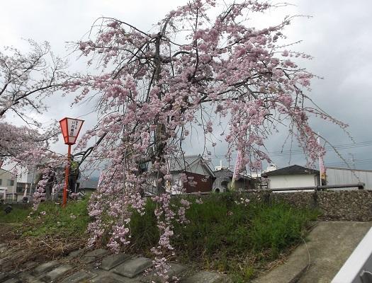 041t-20花.jpg