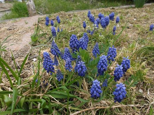 083-17花.jpg